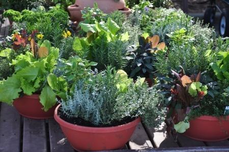 Give a Container Garden
