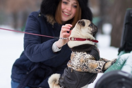 Winter Warmth for Pets