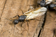 Tips for Avoiding and Eliminating Termites