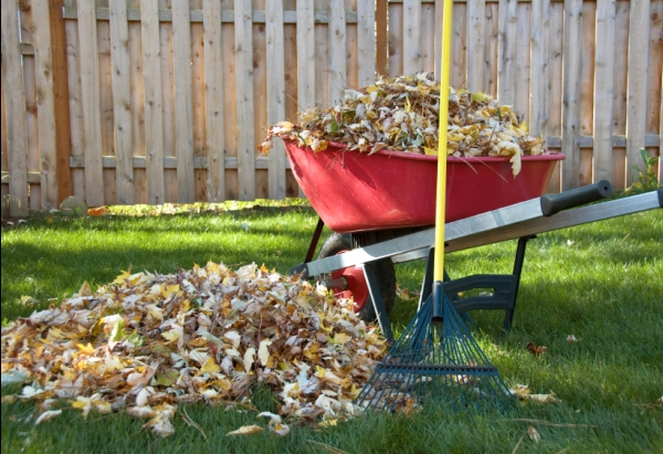 Fall Care for Your Lawn