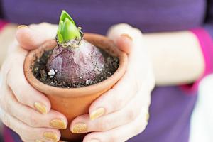 Tips for Planting Flower Bulbs