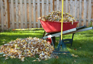 Fall Landscaping Tips