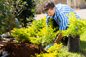 How to Plant Foolproof Shrubs