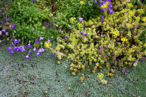 Ground Cover Alternatives to Grass