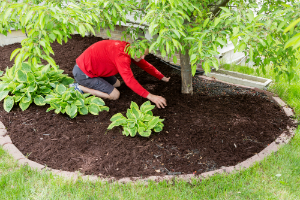 How to Apply Mulch Properly
