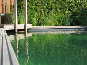 Natural Swimming Pools Self-Clean Without Chemicals