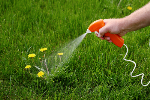 How to Get Rid of Weeds Once and For All