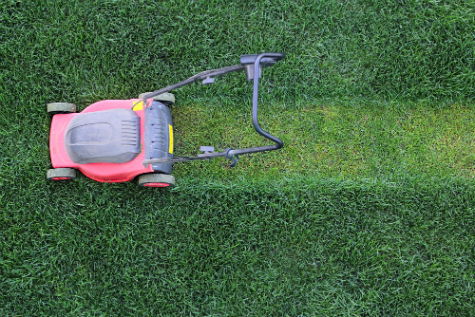 Smart Summer Lawn Care: Keep Grass Healthy While Saving Water & Money