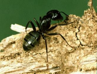 Kill Termites and Carpenter Ants: How to Exterminate