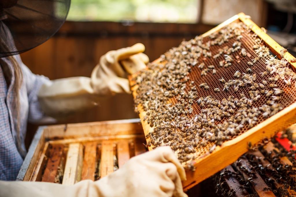 Building a Backyard Beehive
