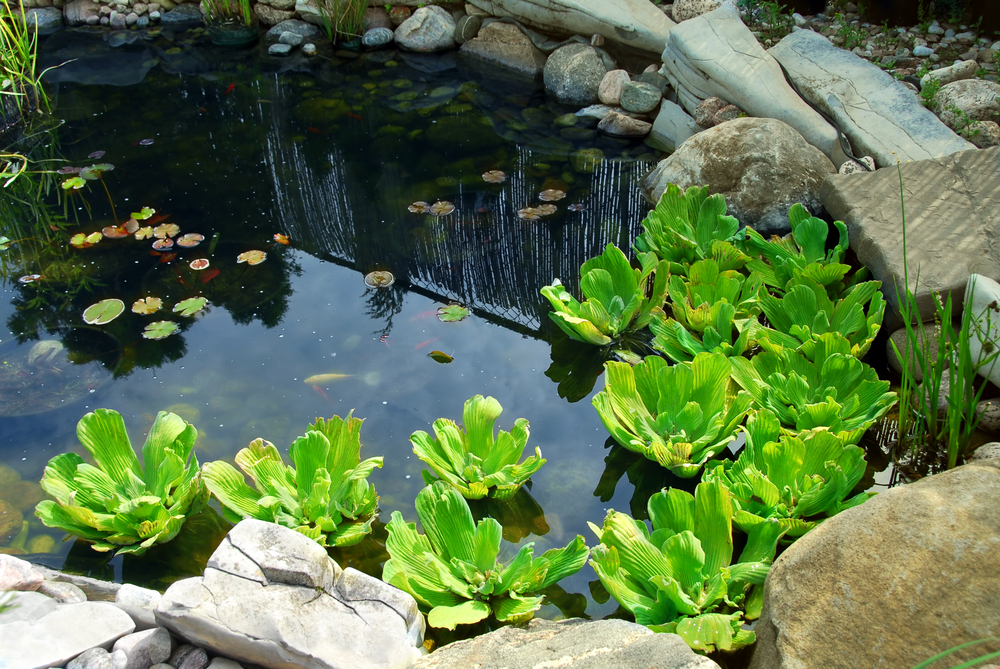 Tips for Building Backyard Ponds and Water Features