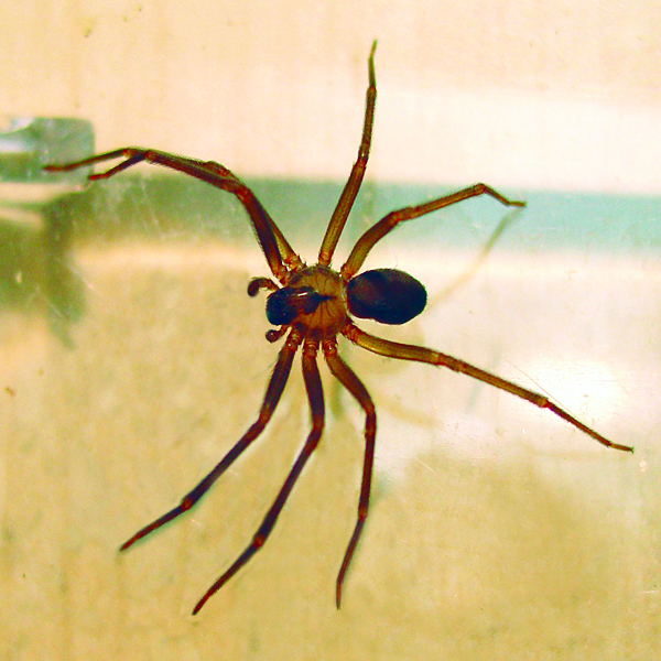 Overwintering Pests: Spiders