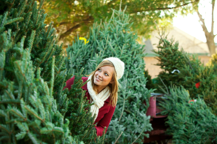 How to Pick a Christmas Tree
