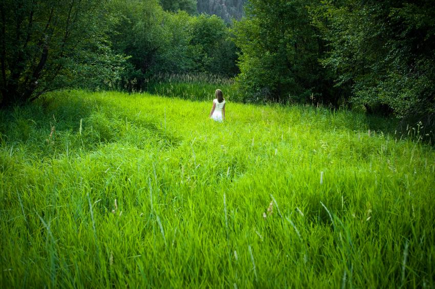 How to De-Thatch a Lawn
