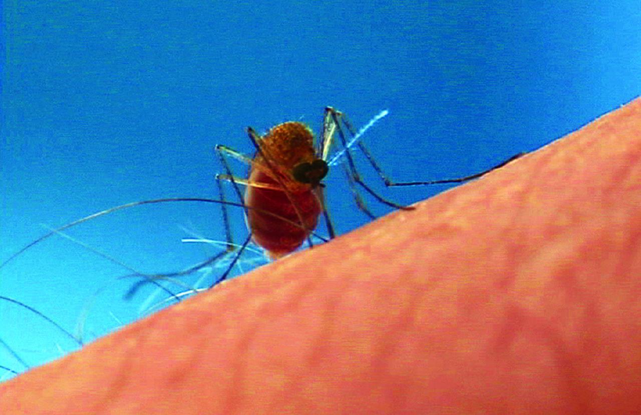 Orkin Mosquito Biting