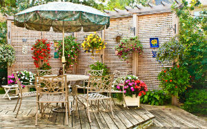 Container Gardening: Tips for Success