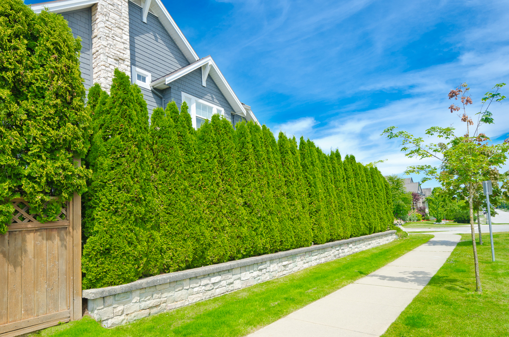 Plant Hedges or Bushes to Create a Living Privacy Screen