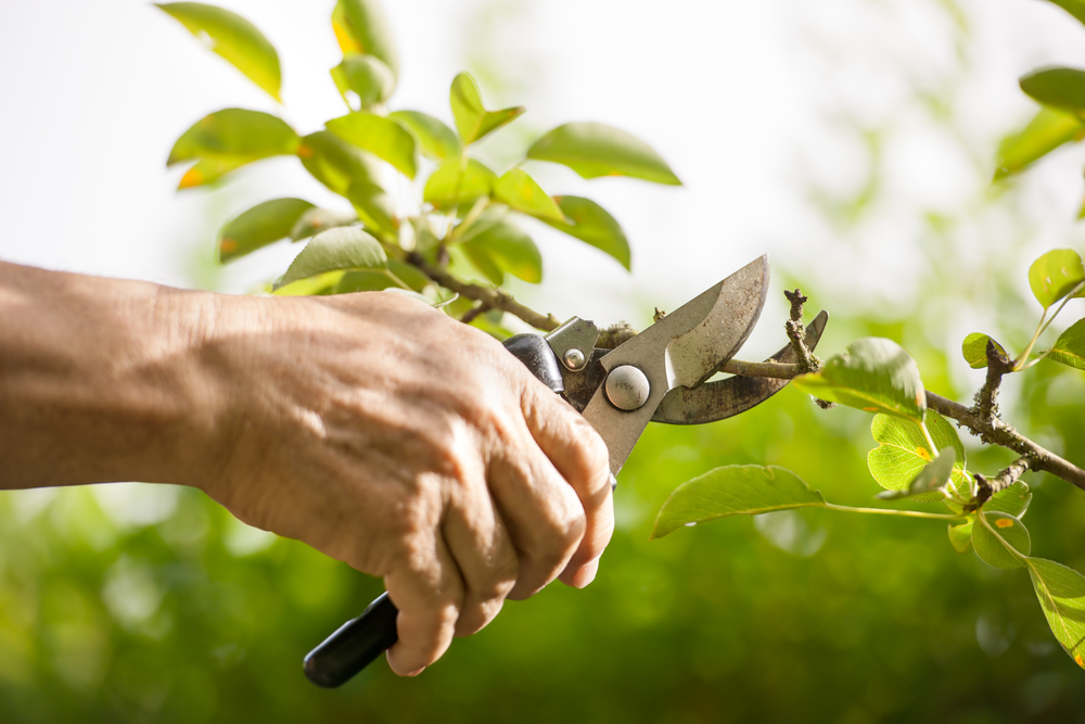How to Prune Your Hedges
