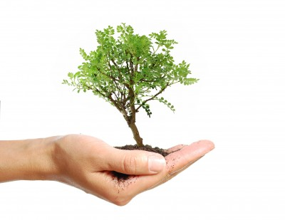 Plant a Tree for Arbor Day!
