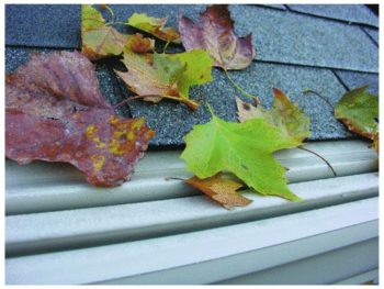 Leaves on top of gutter guard