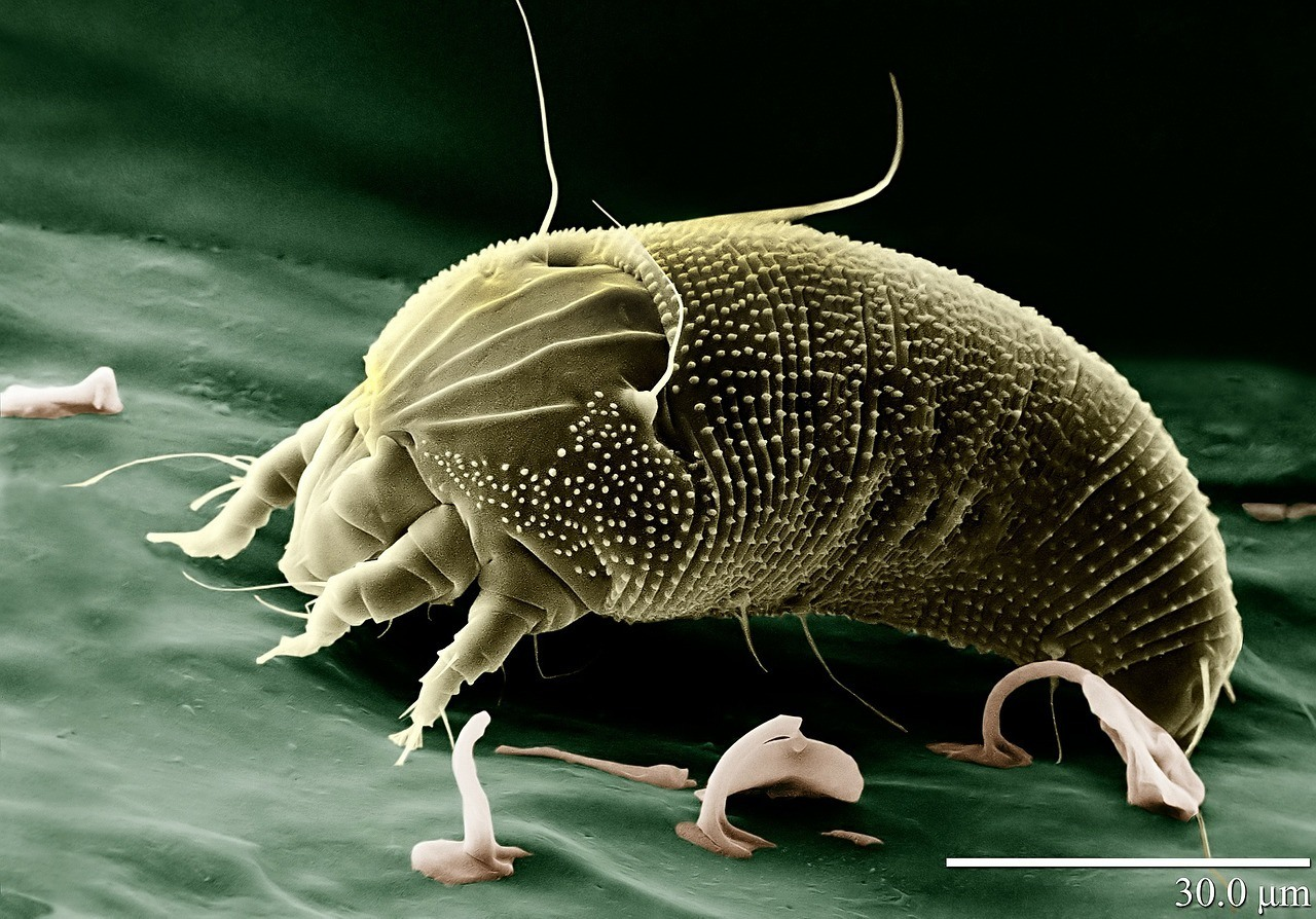 allergy prevention, dust mite