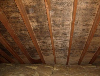 Condensation-Mold-in-Attic