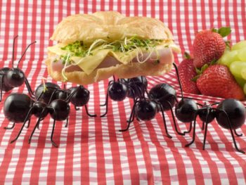 natural pest control, pests
