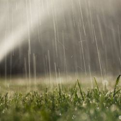 lawn_watering_grass
