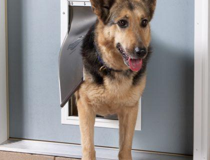 PetSafe Door