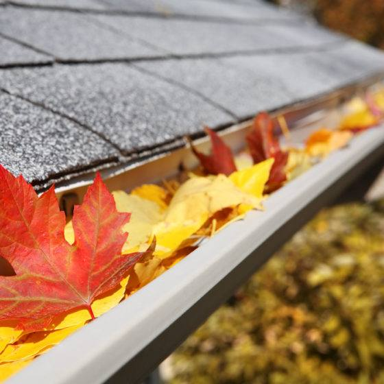 Rain Gutter full of leaves