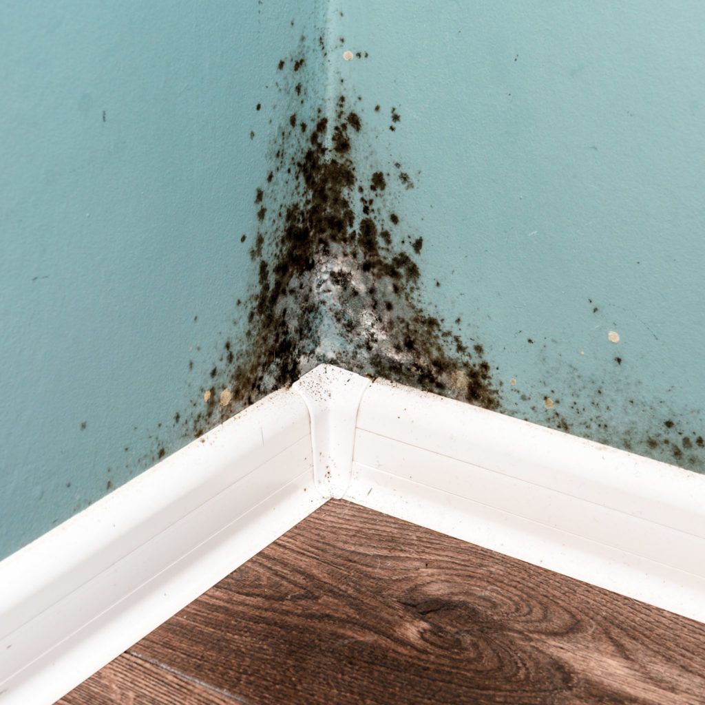 Black toxic mold on a wall