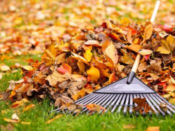 Rake on a pile of leaves