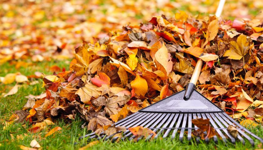 rake_raking_fall_autumn_leaves_leaf_pile_shutterstock_118900342