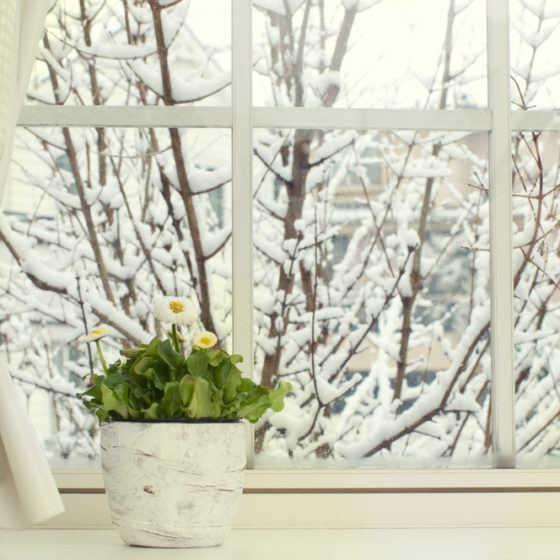 winter_snow_tree_branches_window_shutterstock_177282701