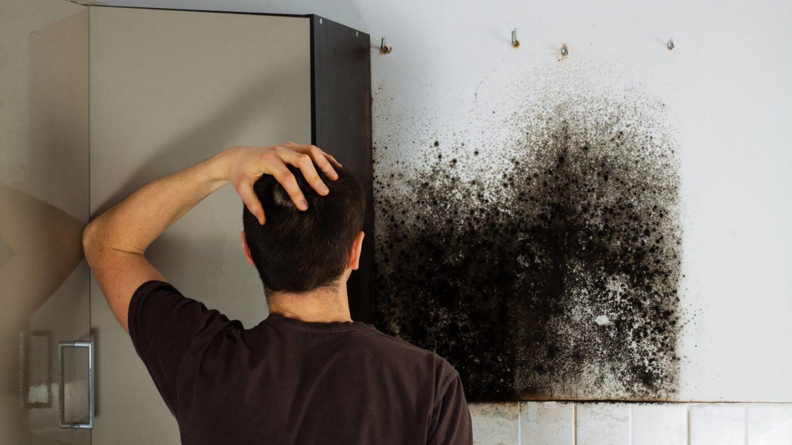 breathe easy, black mold