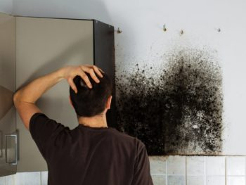 breathe easy, black mold