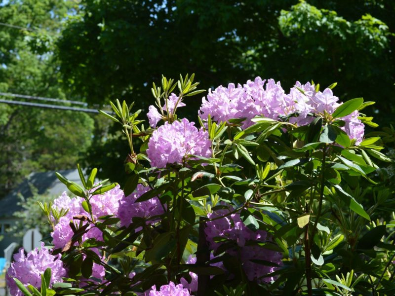 landscape tips for shady yards