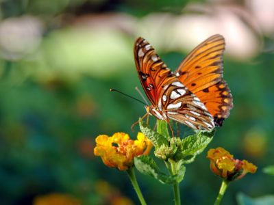 Butterfly resting on a leaf