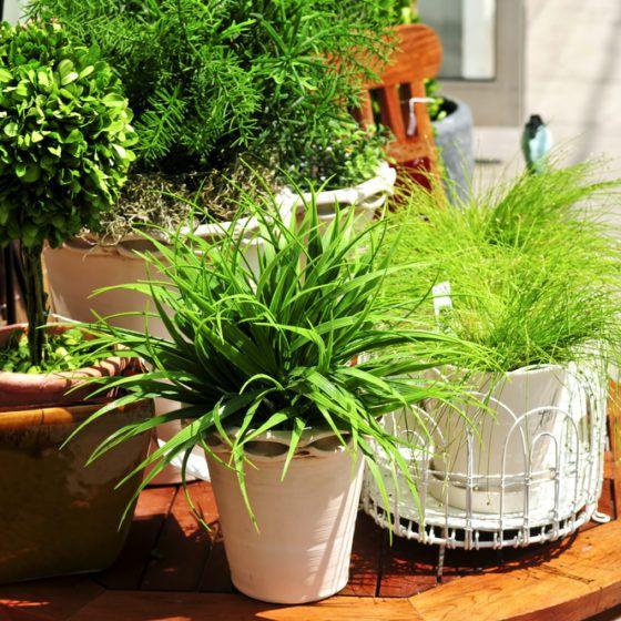 container_garden_pots_plants_shutterstock_15897187