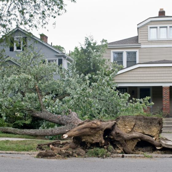 damage_sidewalk_roots_hurricane_storm_down_downed_tree_shutterstock_17468962
