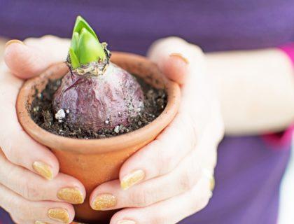 flower_bulb_flower_pot_plant_planting_garden_gardening_gardener_spring_shutterstock_169990013