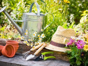 garden, gardening, flowers. watering