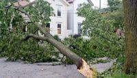 hurricane_storm_down_downed_tree_shutterstock_17468962
