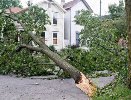 hurricane_storm_down_downed_tree_shutterstock_17468962