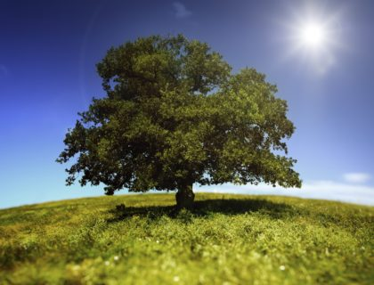 iStock_000014408068Medium_tree_green_sun