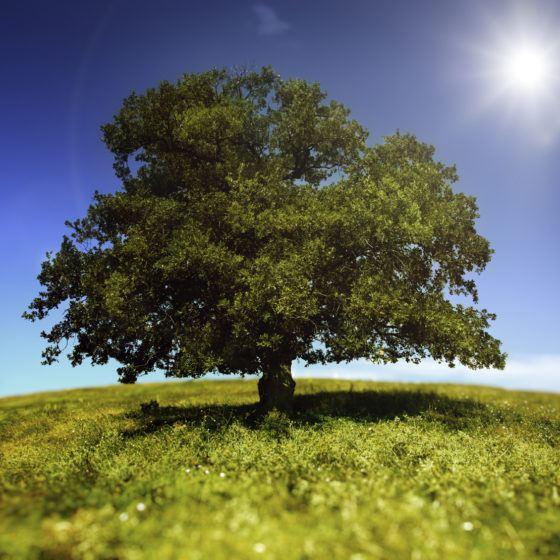 iStock_000014408068Medium_tree_green_sun