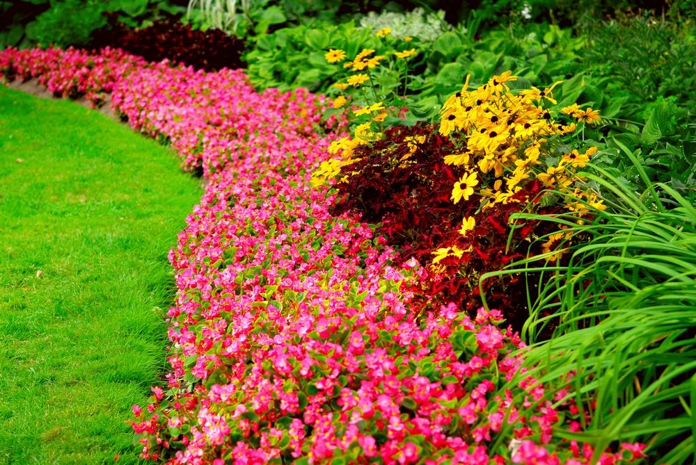 garden, southern gardening