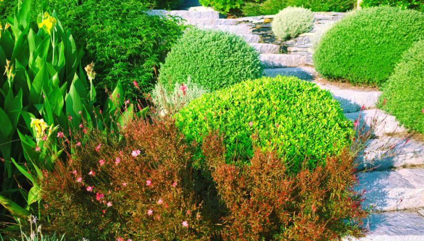 landscape_landscaping_yard_shrubs_bushes_stones_walkway_path_garden_shutterstock_149474522