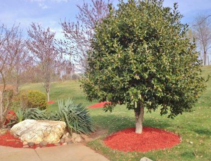 landscaping_tree_mulch_shutterstock_135270086