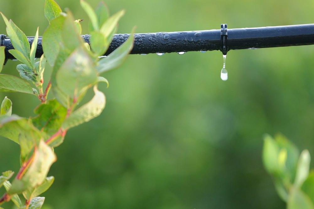 sprinklers, watering, drip irrigation